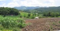 Dynamiques et enjeux des agricultures familiales au Brésil