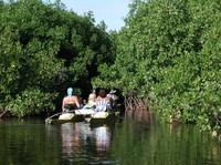 La mangrove : un modèle de développement touristique durable ?