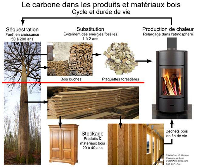 Bois, forêts et carbone en France  enjeux et perspectives