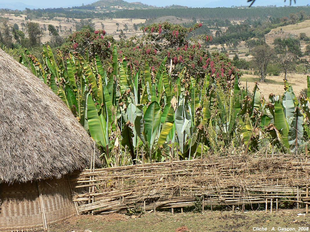 photographie agriculture ethiopie