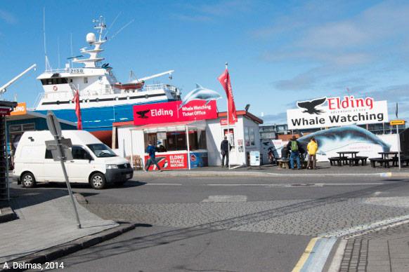 Photographie: observation des baleines à Reykjavik