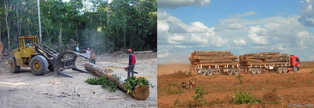 Hervé Théry — photographie exploitation du bois Brésil