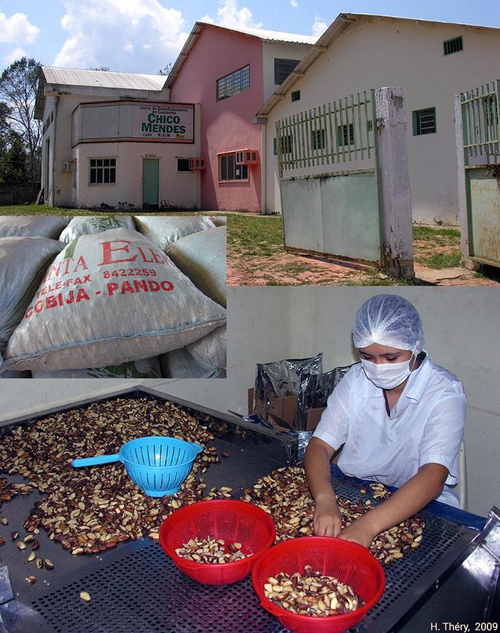 Hervé Théry — photographie noix du Brésil à Xapuri