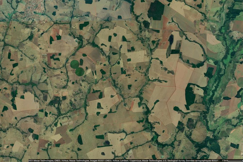 déforestation au brésil boisement relique agriculture élevage
