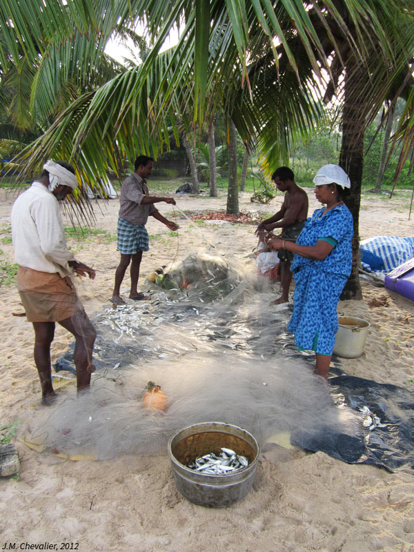 Retour de la pêche au Kérala