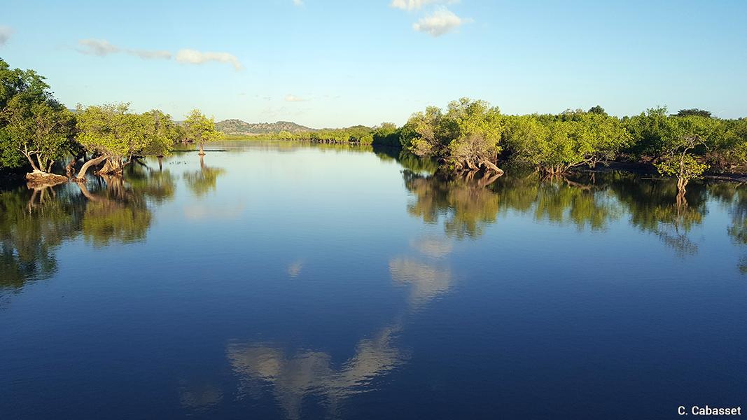 Christine Cabasset — photographie de mangrove