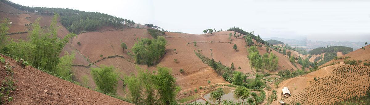 Jean-Daniel Cesaro — photographie déforestation vietnam