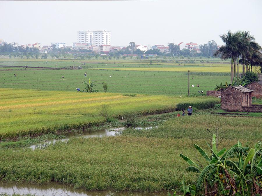Jean-Daniel Cesaro — riziculture irriguée et périurbanisation hanoi
