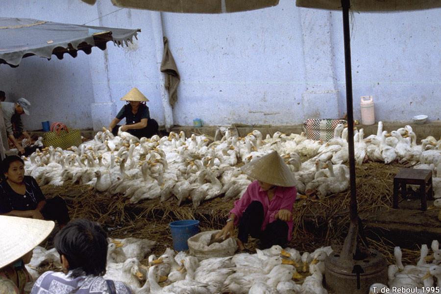 marché canards vietnam