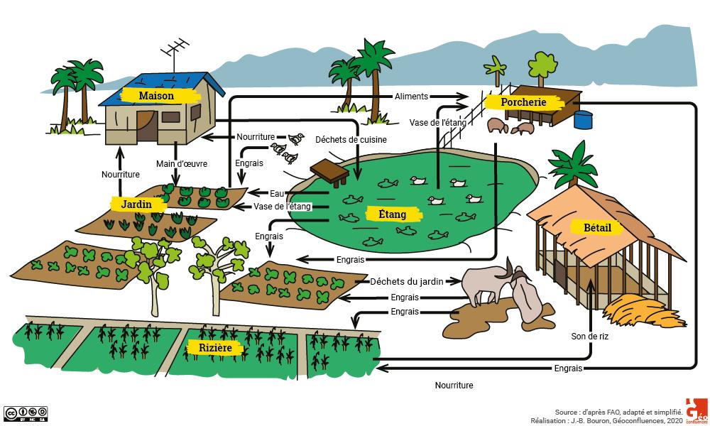 Jean-Daniel Cesaro — VAC système intégré étang verger élevage