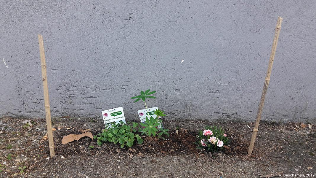 Amélie Deschamps — micro-implantation florale à Montchat