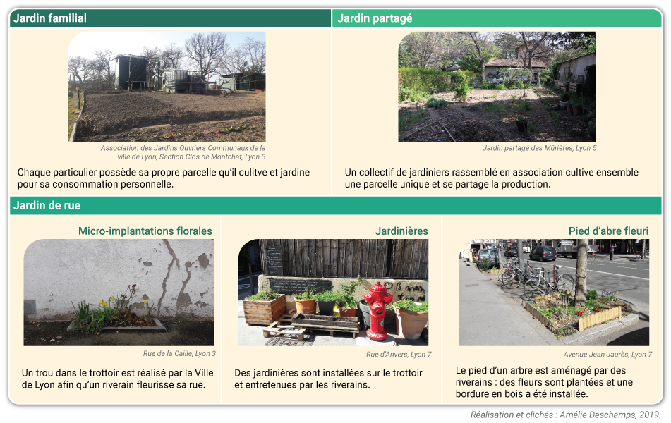 Amélie Deschamps — formes de jardinage urbain