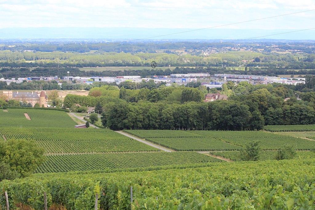 Zone commerciale cachée par la vigne à Chèches sur Saône