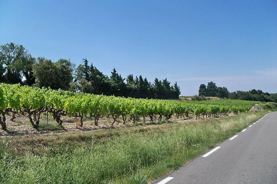 Paysage du comtat venaissin dans l'aire urbaine d'Avignon