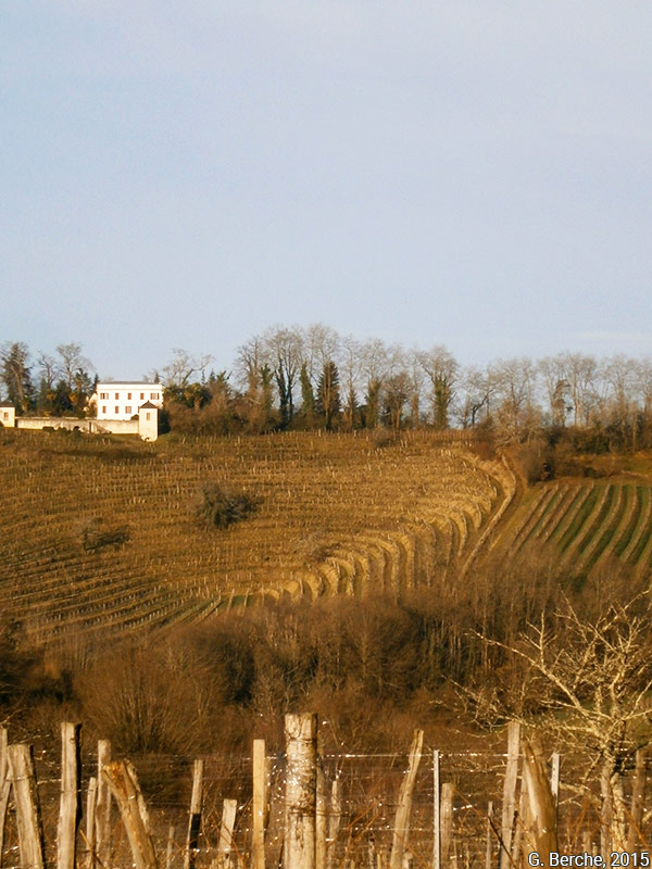 Grégoire Berche — Parcelle de vignes du clos Thou à Jurançon