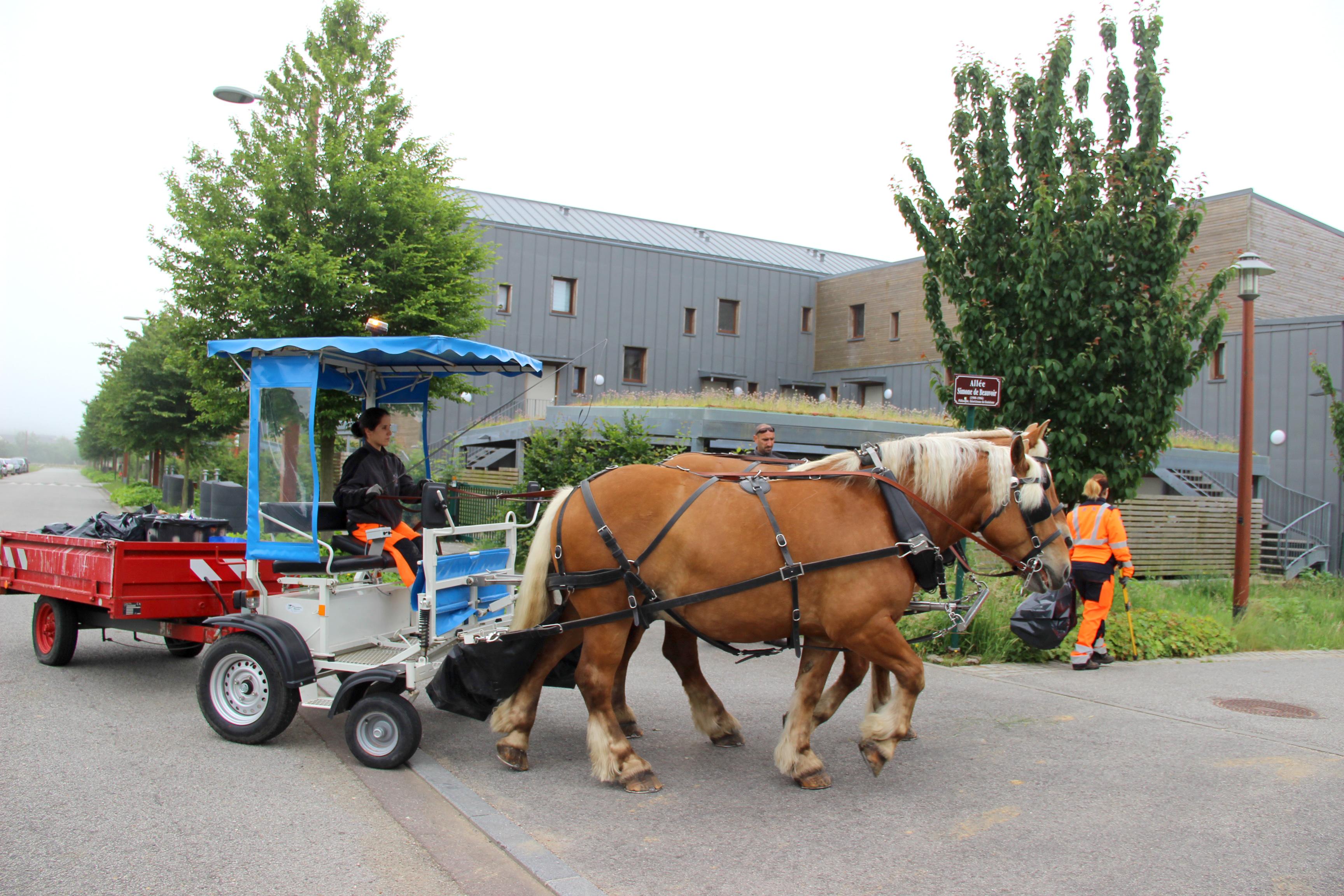 Les chevaux territoriaux de Gonfreville-l'Orcher