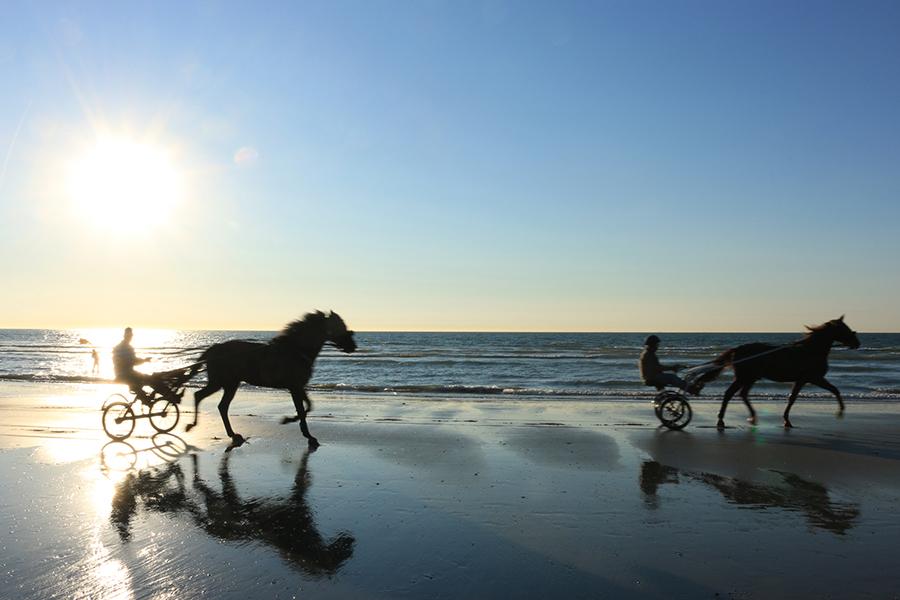 Le cheval à Deauville