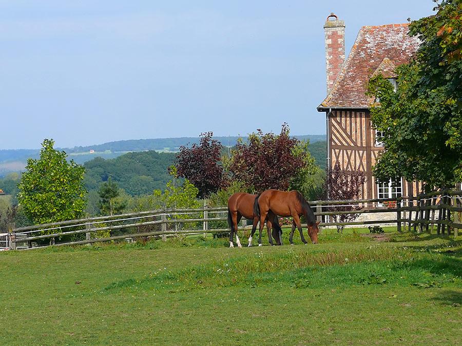 Calvados tourisme chevaux pays d'auge