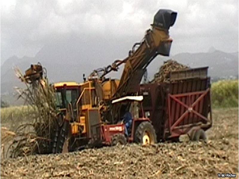 Yves-Marcelle Richer — récolte de la canne à sucre