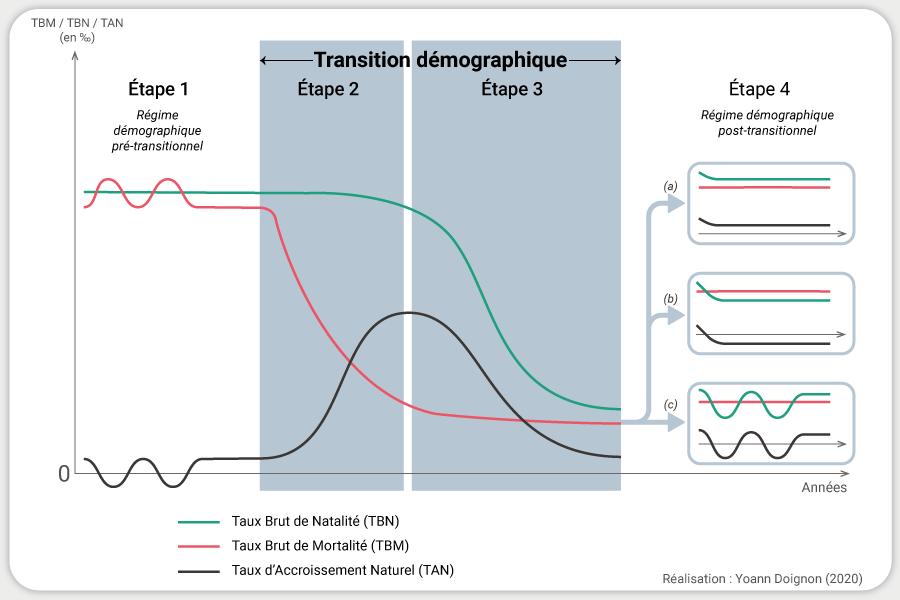 Yoann Doignon — schéma Graphique transition démographique modèle phases
