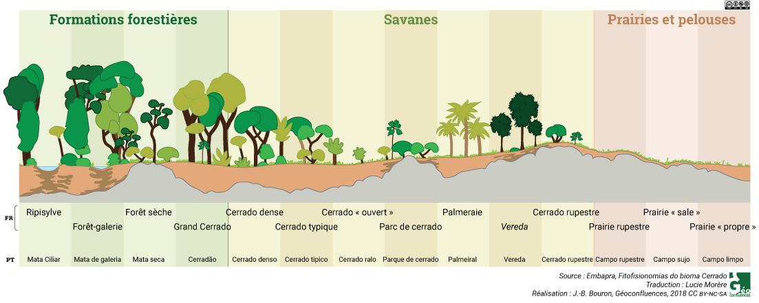 Les diverses formations végétales du cerrado