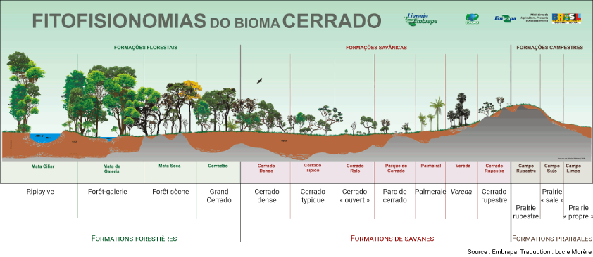 schéma Les diverses formations végétales du cerrado