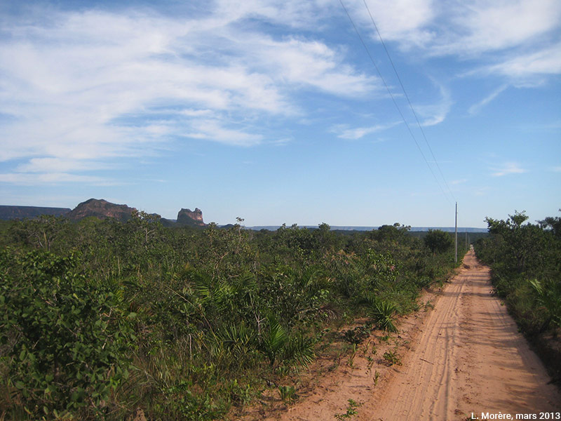 Lucie Morère — photographie Le Cerrado typique, une savane basse aux arbres tortueux