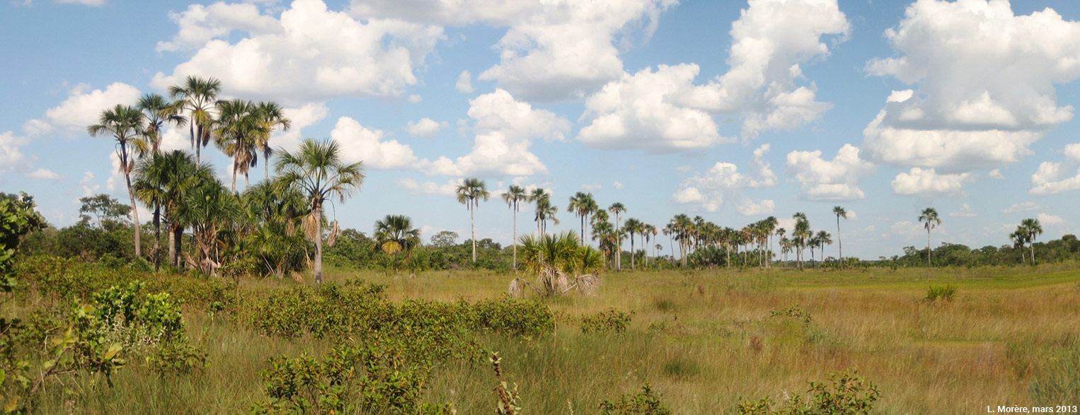Lucie Morère — photographie Une vereda et ses emblématiques palmiers buriti