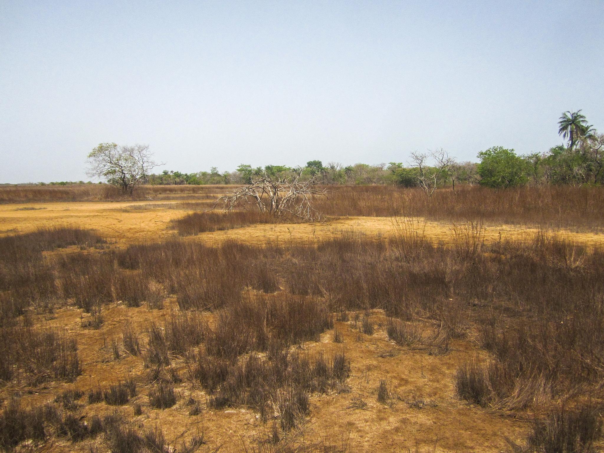 Jbdodane photographie paysage casamance savane