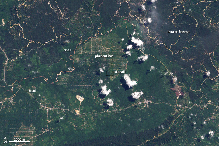 Déforestation à Bornéo image satellite nasa