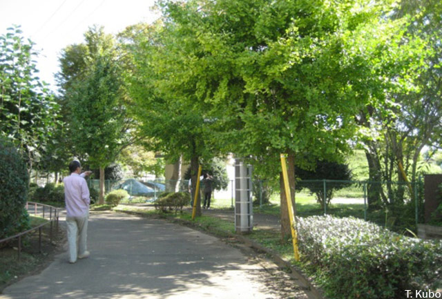 Tomoko Kubo – Pedestrianized roads called 'Green Road""