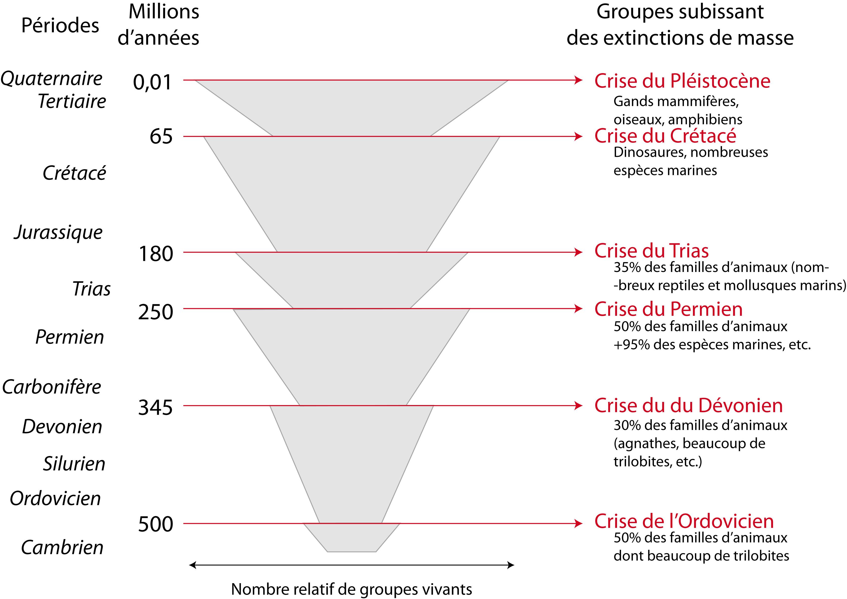 6 crises d'extinction