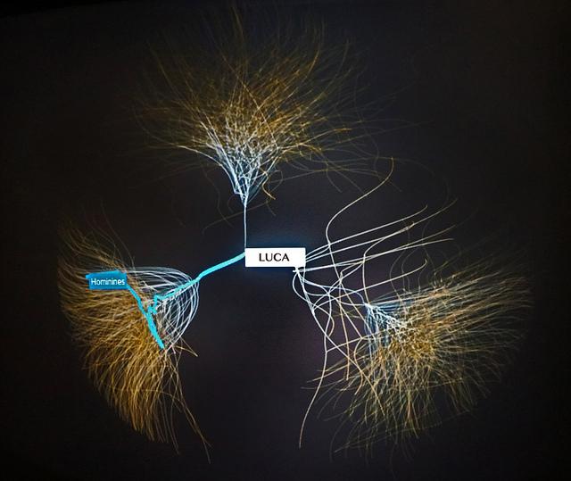 buisson de l'évolution musée des Confluences