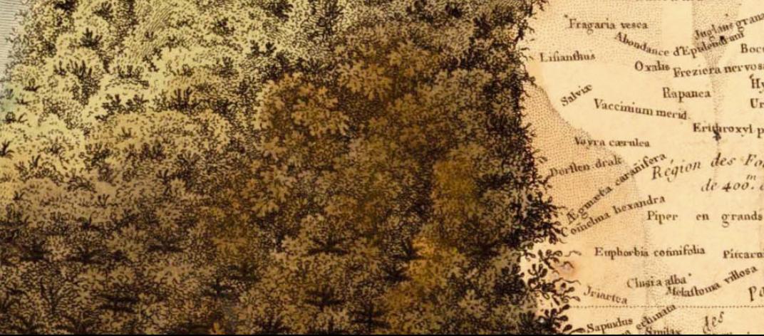 Alexander von Humboldt, géographie des plantes équinoxiales