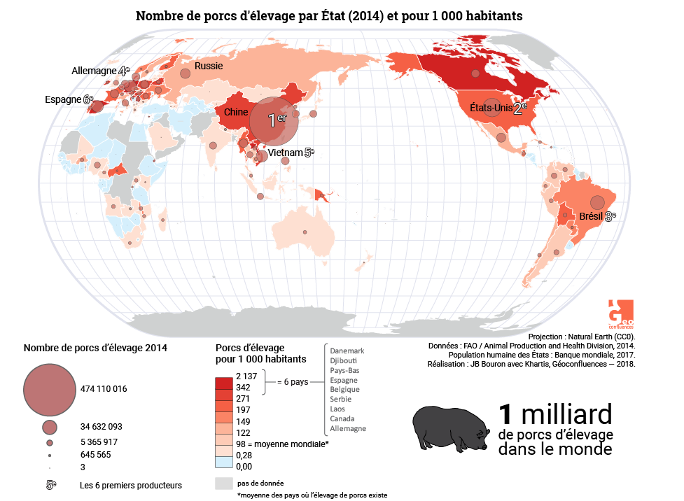 Planisphère élevage porcin (suidés, cochons) dans le monde. World map of pork production (hog)