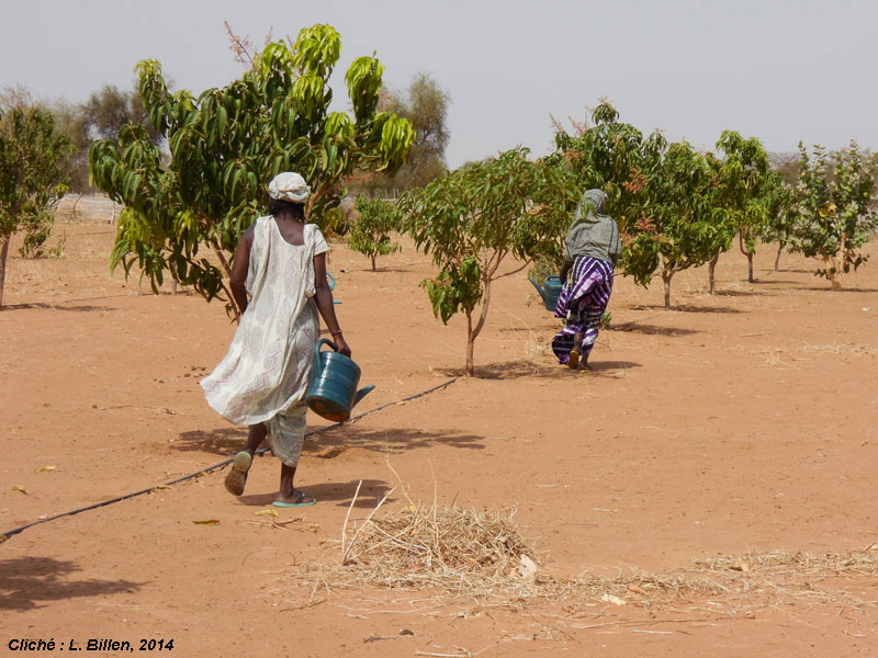 Léa Billen Sahel jardins villageois