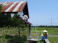 Vieillissement et déclin rural : redynamiser les campagnes japonaises par les festivals d'art contemporain